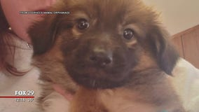 12-week-old puppy stolen from Voorhees Animal Orphanage; suspect sought