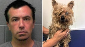 Man gets house arrest for abandoning blind, elderly Yorkie in cooler bag
