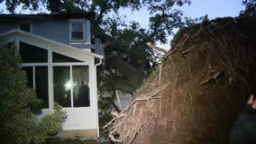3 rescued after large tree crashes through Ambler home