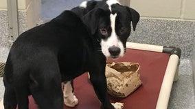Delaware County animal shelter hosts Thanksgiving dinner for homeless pups