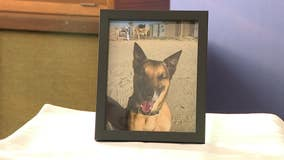 Military working dogs remembered at memorial service at Joint Base McGuire–Dix–Lakehurst