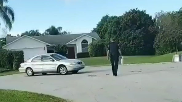 Dog puts car in reverse, drives in circles in Florida neighborhood