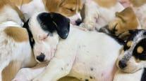 Brandywine Valley SPCA Mega Adoption Event: 1,000+ homeless pets seek forever homes