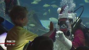 Scuba Santa goes for a dip at Adventure Aquarium