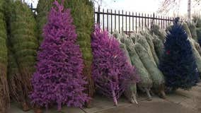 South Philly Christmas tree business still serving community after more than 40 years
