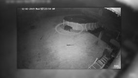 Police release footage of new bear sighting in Springfield Township