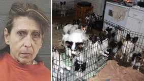 Idaho woman charged after 55 dogs, 3 cats rescued from feces-filled home