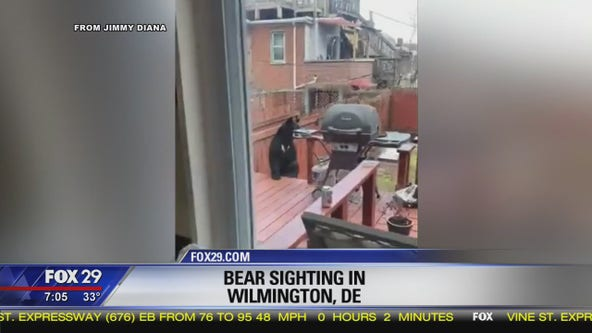 Bear sighted in Wimington, Del.