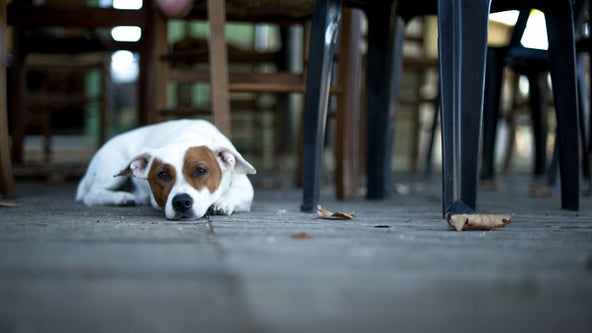 Proposal would allow dogs onto Delaware restaurant patios, decks