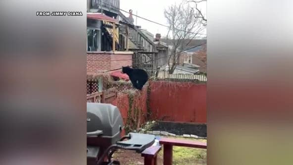 Black bear spotted running through residential area in Wilmington