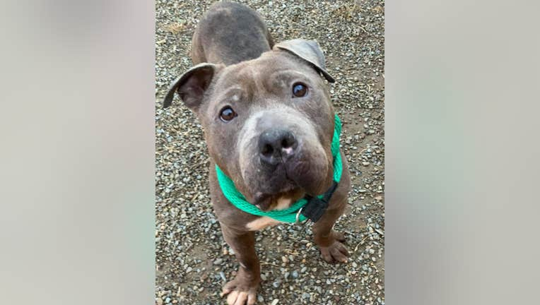 ACCT Philly dog 'Max' missing from shelter