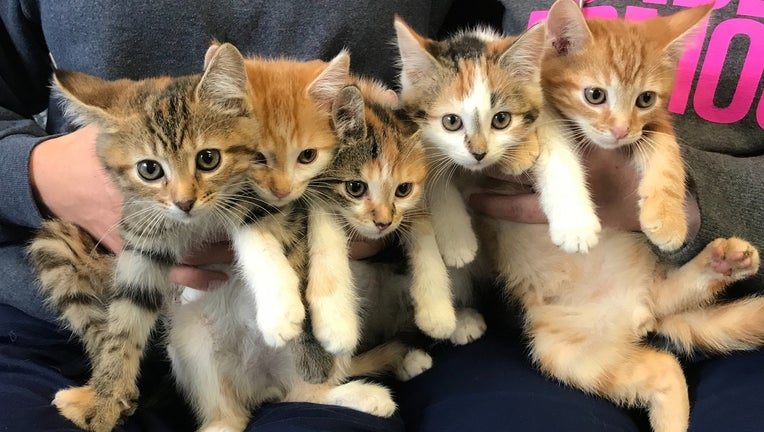 Berks County Animal Rescue League