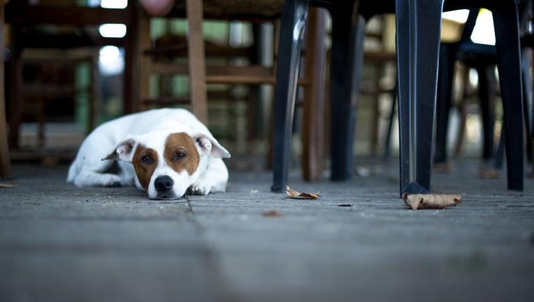 Dog sitting at outdoor restaurant