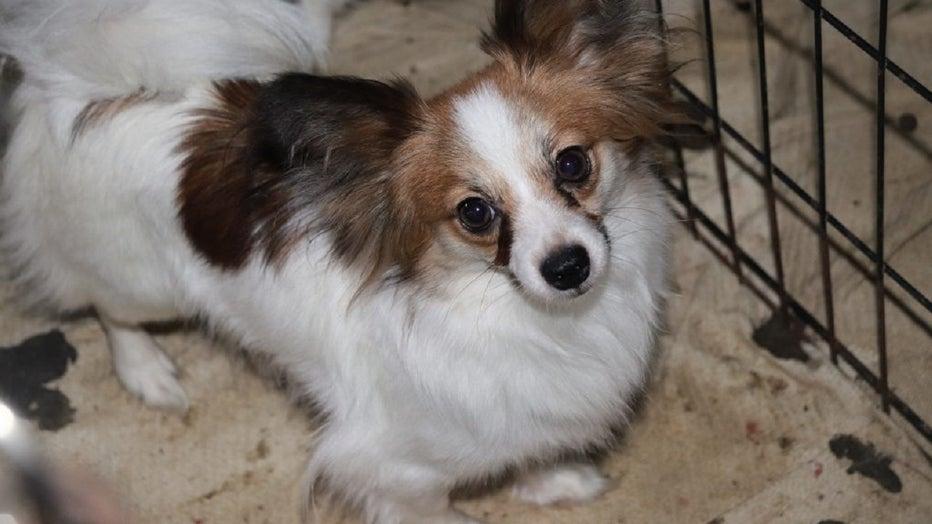 Idaho Humane Society rescue