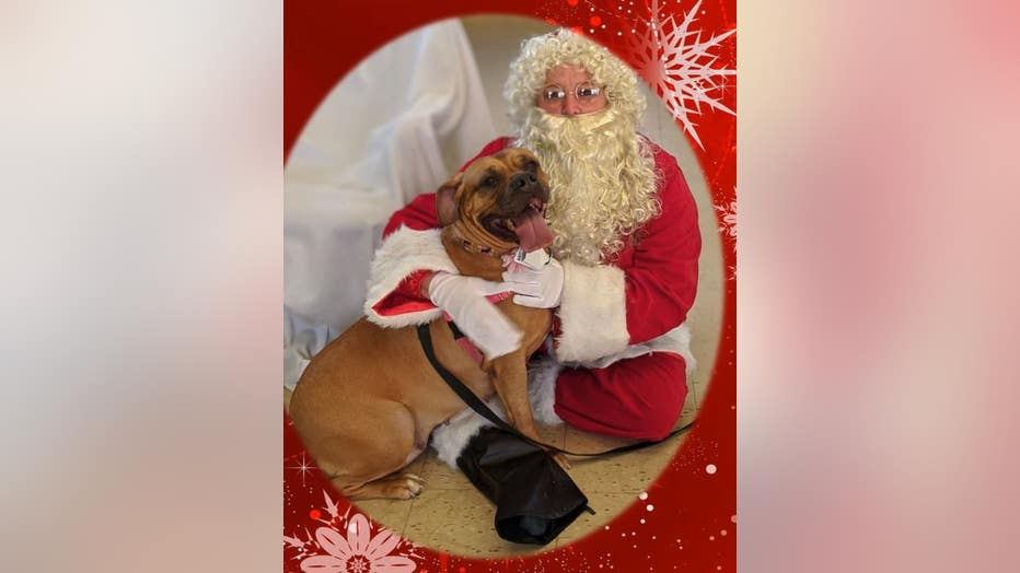 PSPCA pup Lucy asks Santa for a forever home