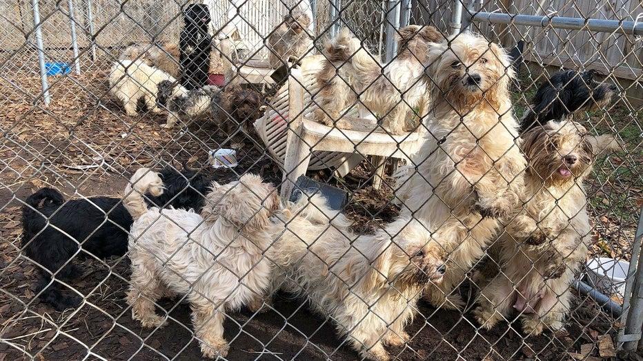 Shamong Township dog raid of Donna Roberts property