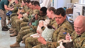 Australian Army soldiers spend days off caring for koalas rescued from bushfires