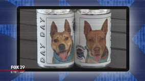 Click This: Minnesota woman sees long-lost dog's photo on beer cans promoting Manatee County shelter pups