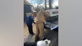 Wild turkey euthanized after it was rescued by New Jersey farm