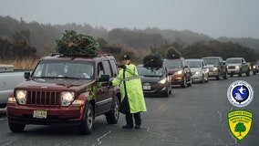 Thousands of Christmas trees donated to repair sand dunes in New Jersey