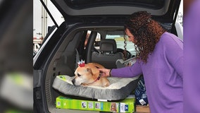 After 2,461 days at shelter, 12-year-old dog finds forever family