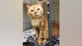 24 sick cats found living inside unheated car in Bucks County