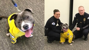 Dog with inoperable tumor becomes police K-9 for a day