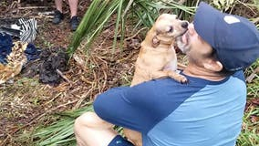 Florida dog owner reunites with Chihuahua missing for days after New Year's Eve car crash