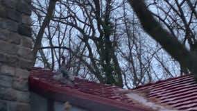 Turkey ends up on roof of home in Haddon Heights
