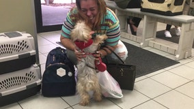 New Jersey family reunites with dog missing for 3 years who was found as a stray in Tampa