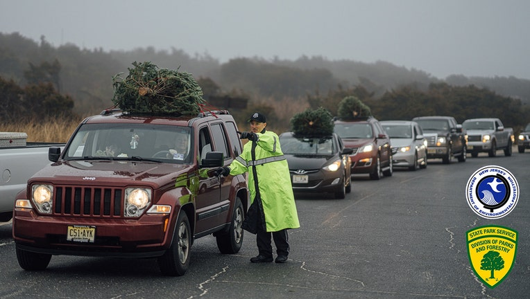 Cars lined up at Island Beach State Park in New Jersey to drop off Christmas trees that will be used to bolster the sand dunes.