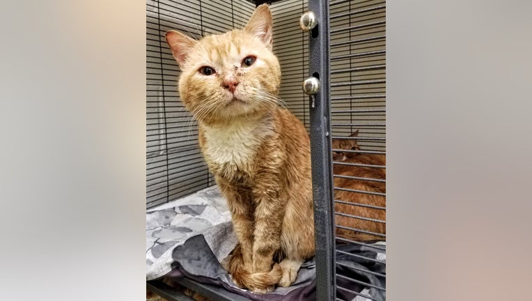 Bucks County SPCA rescues 24 cats from car in Morrisville