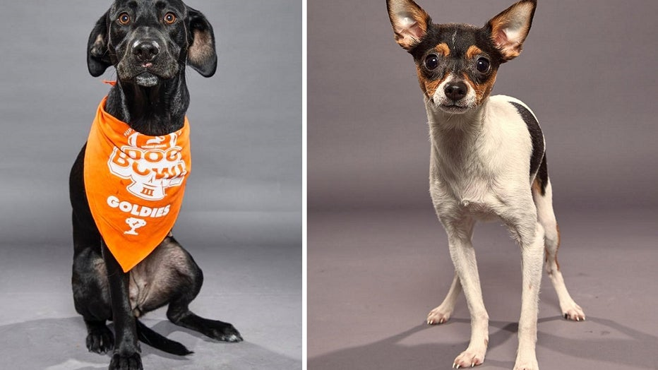 Puppy Bowl contestants from the Delaware Valley