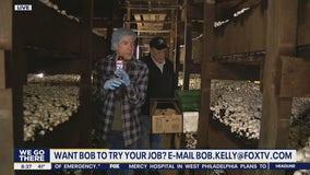 Bob on the Job: Greenwood Mushroom Farm