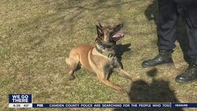 "Famous K-9 Bowie is impressing the world as he stars in ""America's Top Dog"""