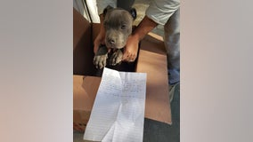 12-year-old boy drops off pit bull puppy at shelter to protect it from his abusive father