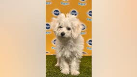 Several SoCal rescues featured at this year's 'Puppy Bowl'