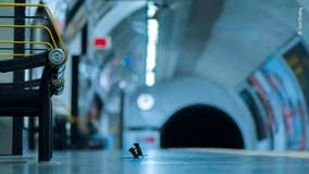 Photo of mouse fight on London subway platform wins Wildlife Photographer of the Year award