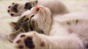 New Jersey revisits ban on declawing cats as bill advances