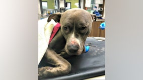 PETA offers $5,000 reward for info on abandoned dog found in trash bag