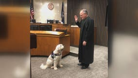 Introducing Izzy, the Macomb County therapy dog helping kids in court