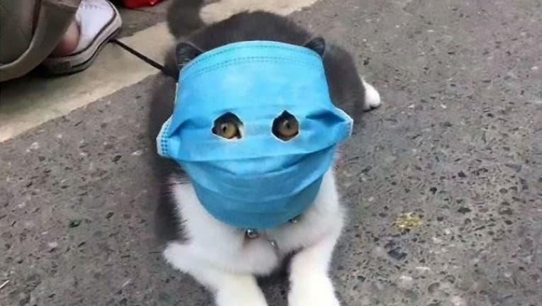 Chinese pet owners putting face masks on cats and dogs amid the coronavirus outbreak.
