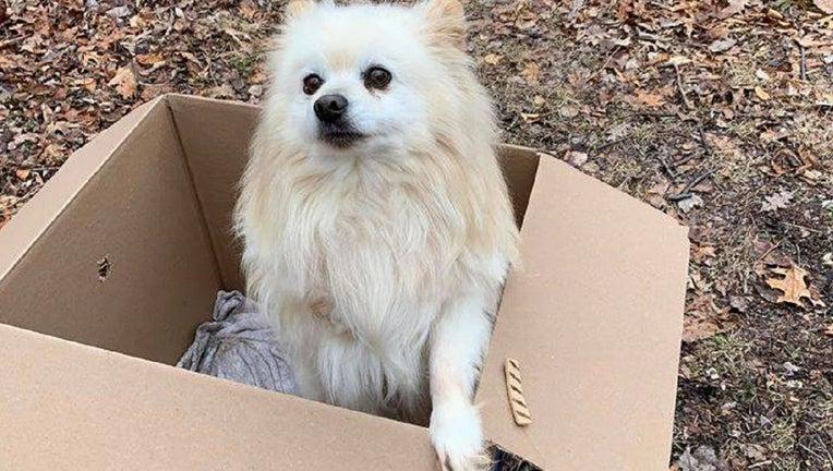 Carbon County Animal Shelter dog abandoned