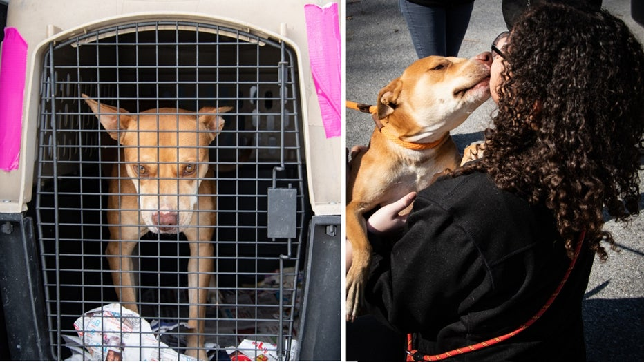 Brandywine Valley SPCA rescues 30 dogs from Puerto Rico