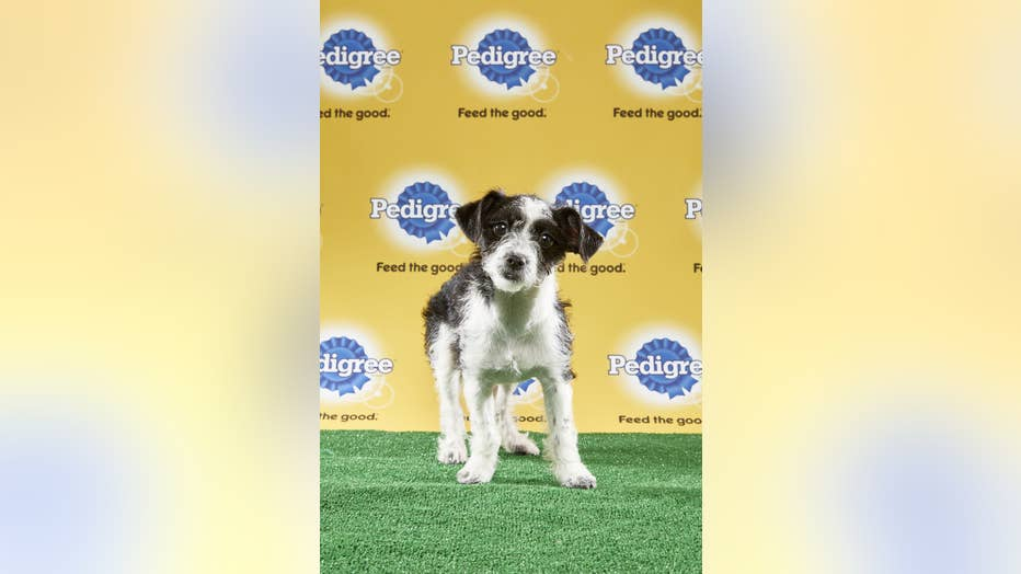 Bo-Puppy-Bowl.jpg