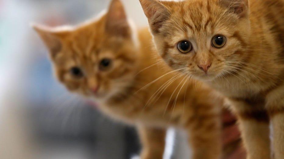 Animal Sanctuary Needs £200,000 To Avoid Closure
