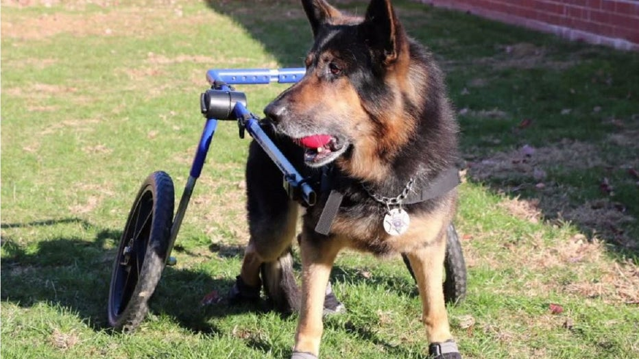 Before his retirement, K-9 Yukon assisted the Chester County Sheriff's Office.