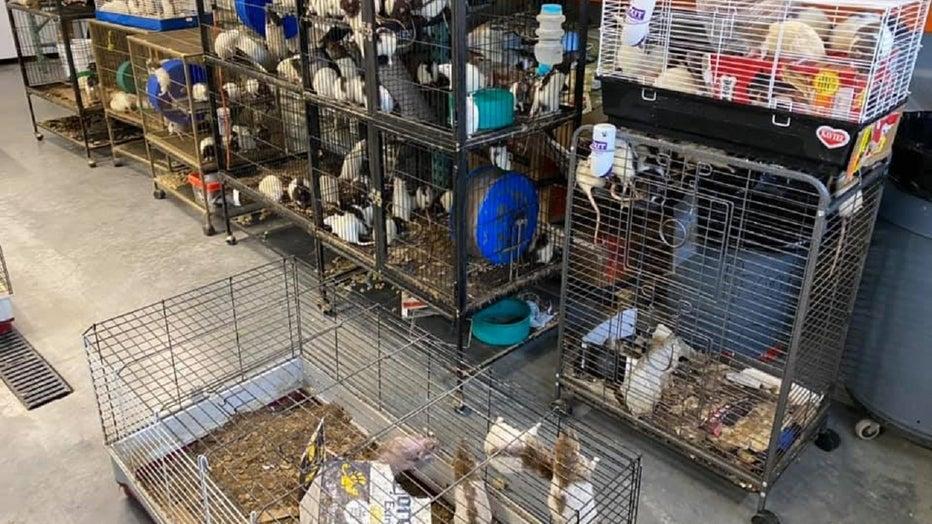KC Pet Project animal rescue