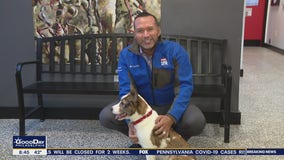 These furry friends are searching for furever homes!
