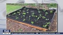 Whatcha Makin? Home gardening edition